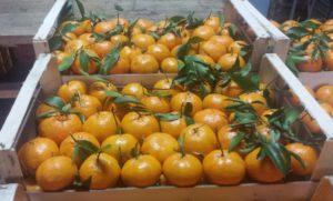 Mandarini naturali non trattati