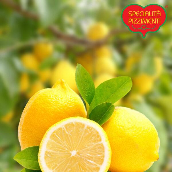 limoni-di-calabria