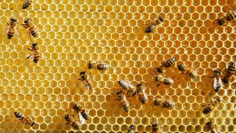 miele Calabrese Specialità pizzimenti