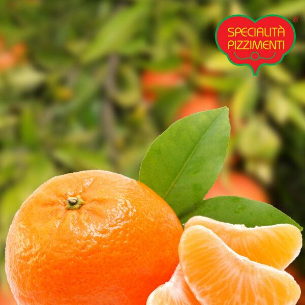Clementine di Calabria